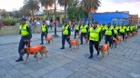 A parade of perros - each with its name on its jacket