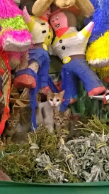 Curious kittens in the market
