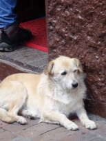 One of many dogs in Candelaria neighborhood