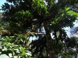 More jungle foliage.